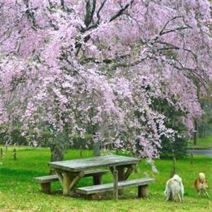 第2回テーマ「#公園で楽しむなすから」